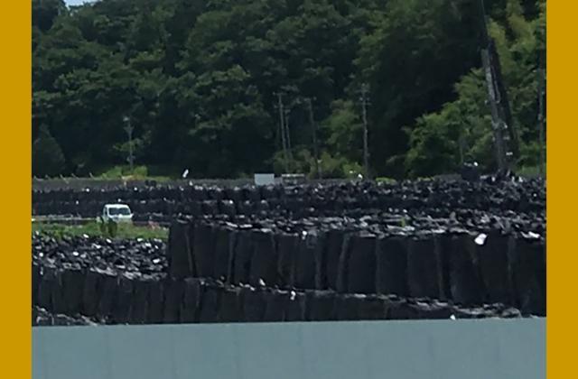 Piles de sacs noirs remplis de déchets et de sols contaminés par la radioactivité, s'étendant à perte de vue.